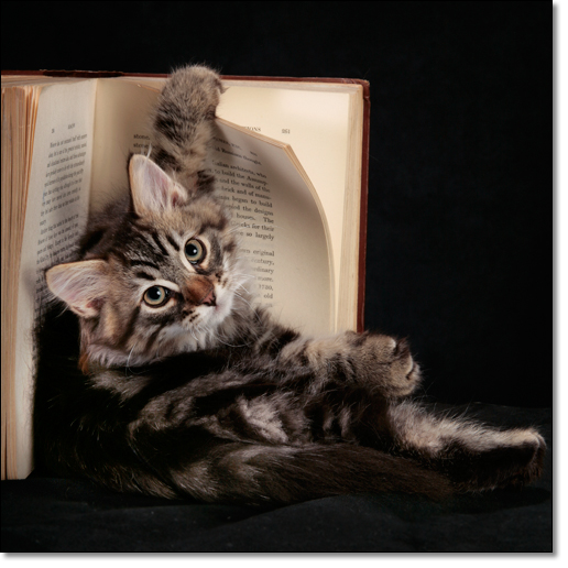 A photograph of A reader