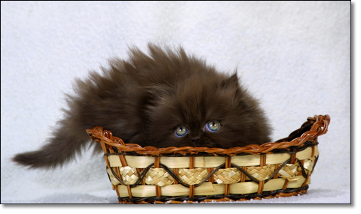 A photograph of What is that!? 