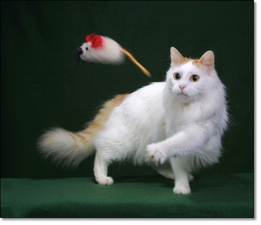 A photograph of First Mouse Speed