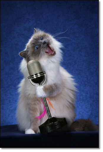 A photograph of Swing Jazz