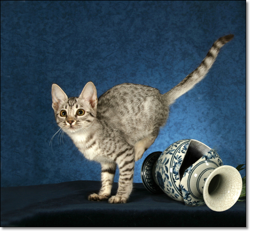 A photograph of Temasek Sugarbabes