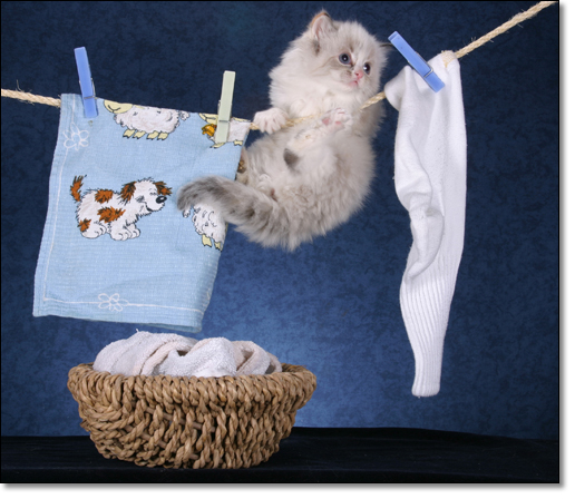 A photograph of Laundry day
