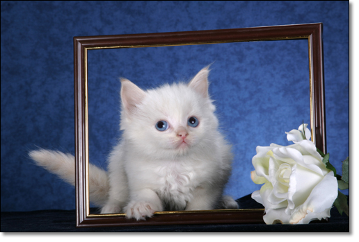 A photograph of Framed