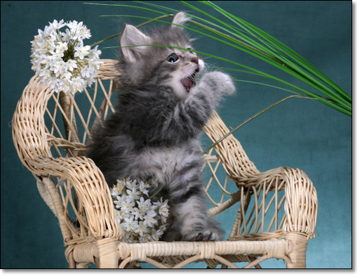 A photograph of Tasty flowers