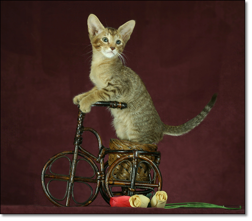 A photograph of Byciclist