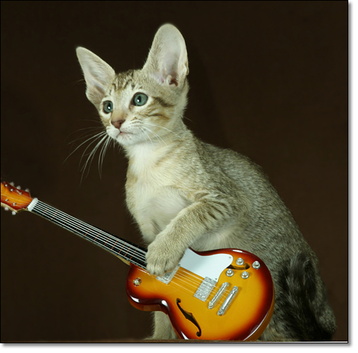 A photograph of Guitarist
