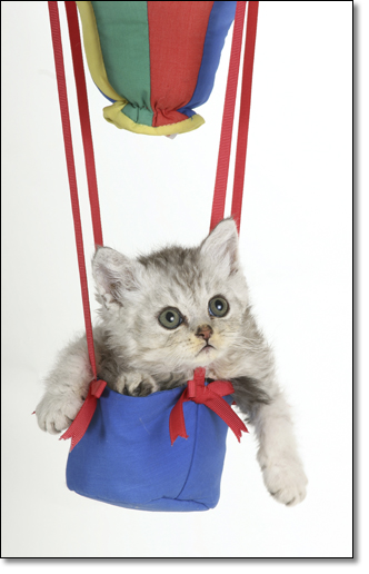 A photograph of The baloonist