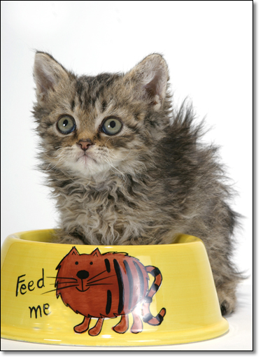 A photograph of Feed me!