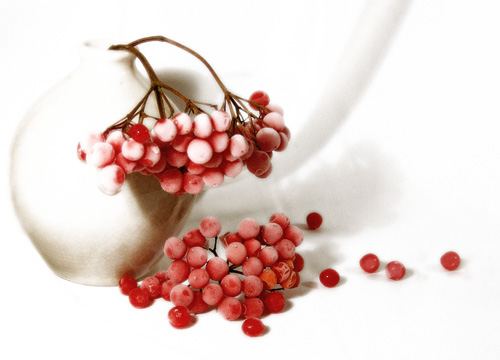 A photograph of Winter berries