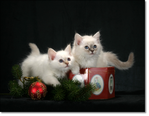 A photograph of Presents