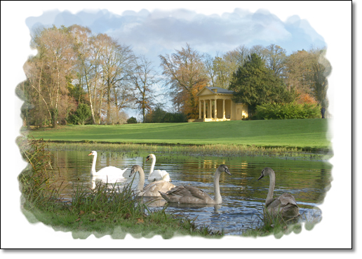 A photograph of Swan Lake